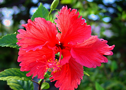 Scenery photo of Maui #5